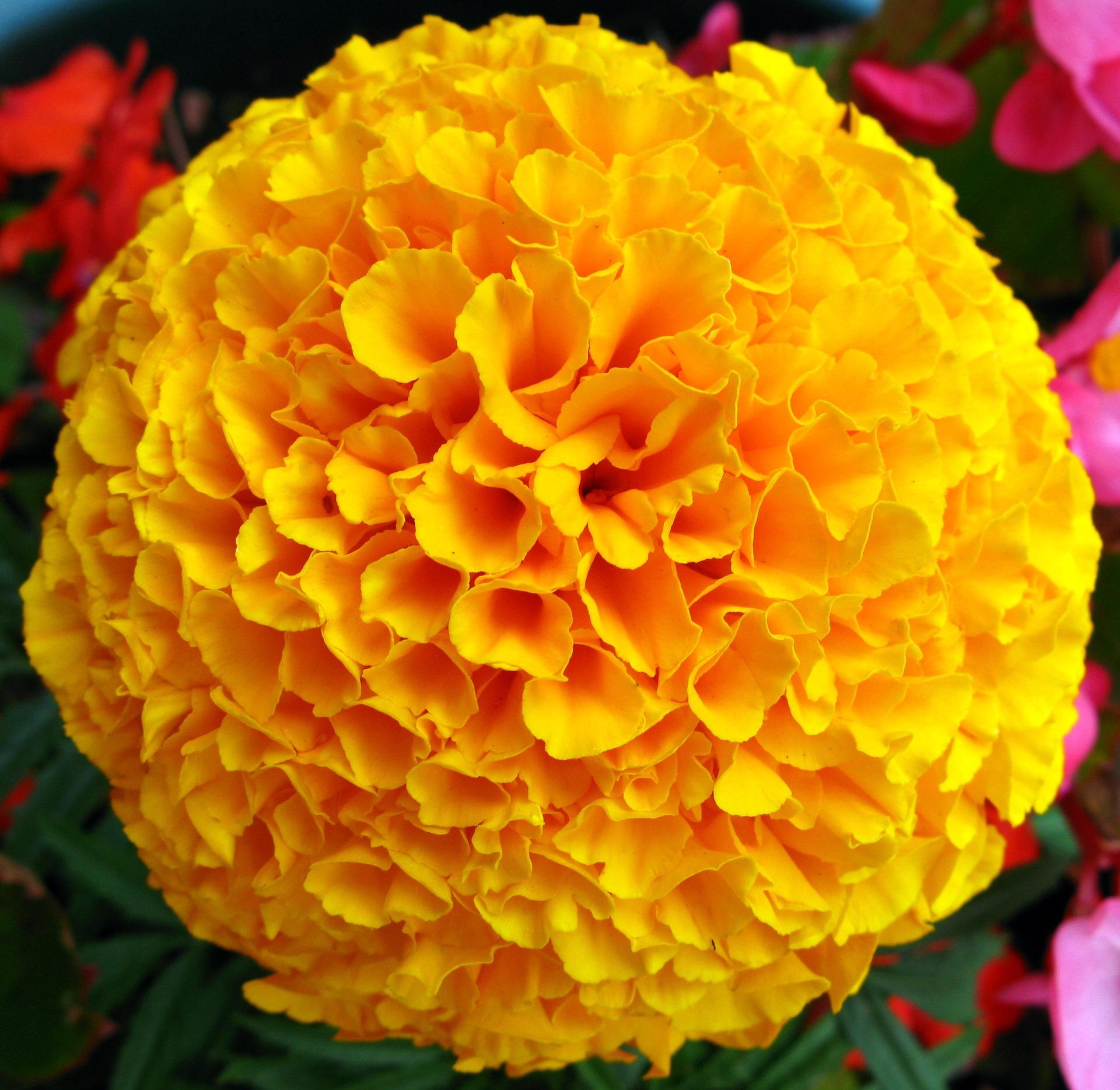 flower-669579_1920